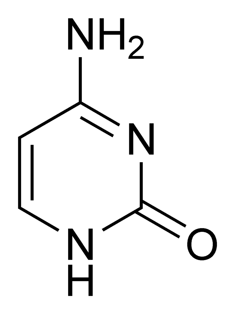 800px-Cytosine_chemical_structure