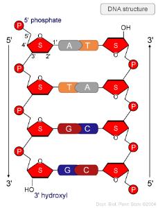 DNA_structure.jpg