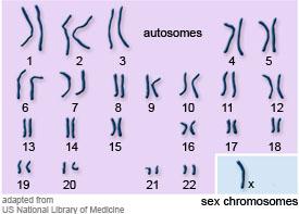 karyotypeTurner