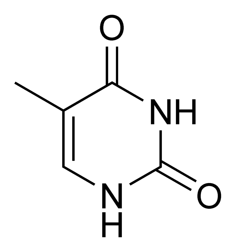 800px-Thymine_chemical_structure