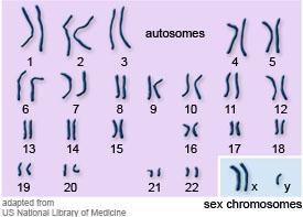 karyotypeKlinef